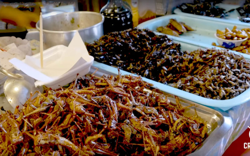 Robots are mass – producing insects as the meal of the future